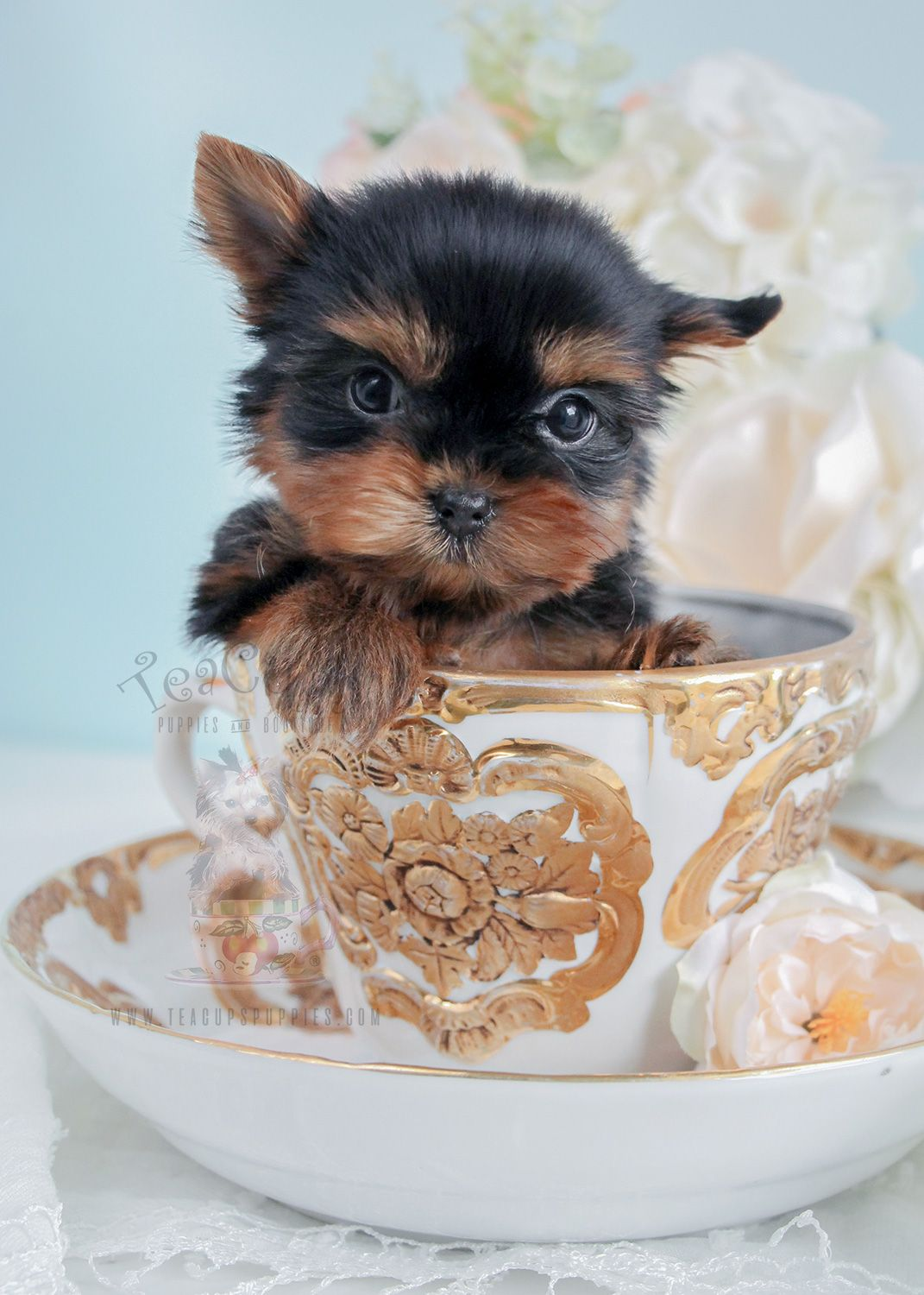Treat Your Pet Right With These Dog Care Tips Yorkie