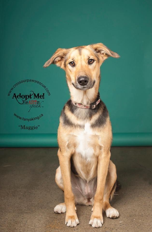 Adopt Maggie On Paws Rescue Dog Adoption Adoption