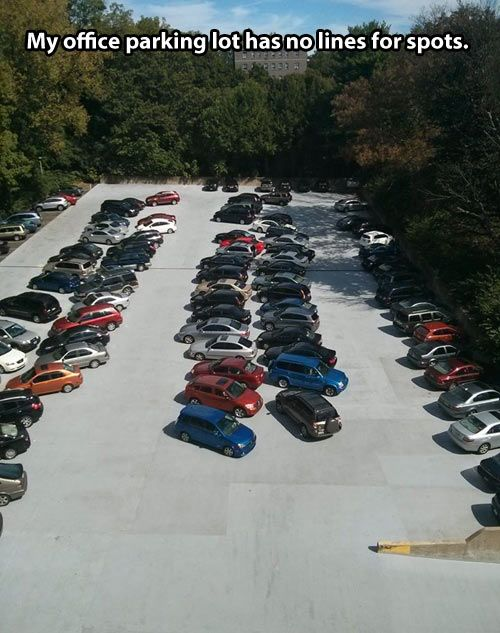 Chaos In The Parking Lot Funny Memes Funny Funny Animal Pictures