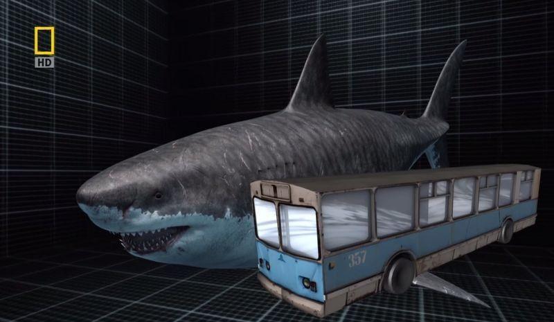 Megalodon Shark Comparison | description the megalodon ...