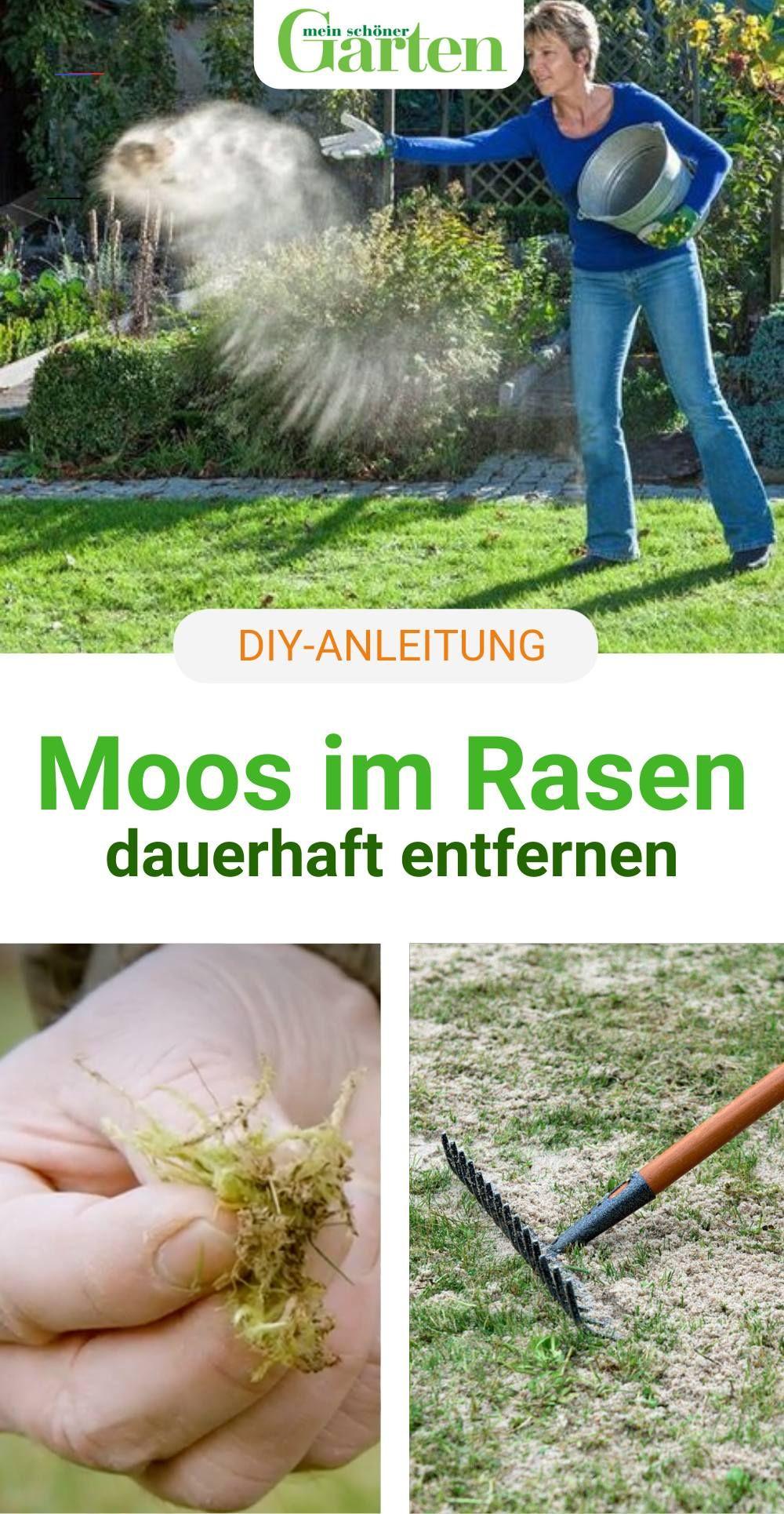 Fur Einen Gesunden Rasen Moos Entfernen Hausdeko Damit Der Rasen Moos Und Unkrautfrei Bleibt Reicht Es Nicht Die Pflanzen R Gazon Gezond Balkon Ideeen