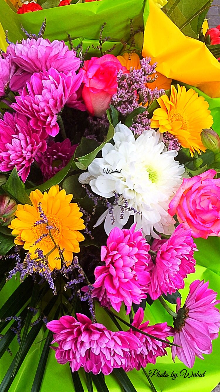 Pin By Hope Lucero On Pretty Flowers Pinterest Beautiful Flowers
