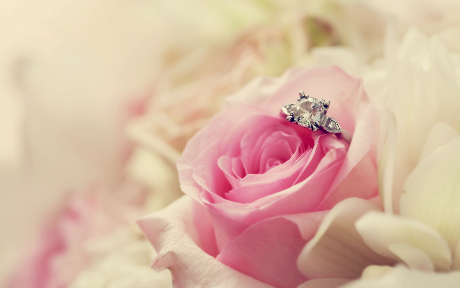 Flower And Ring For Wedding Wallpaper HD Wallpaper | Picture ideas ...