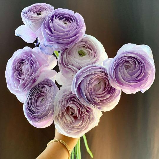 26 Tumblr Purple Flowers Flowers Flower Power
