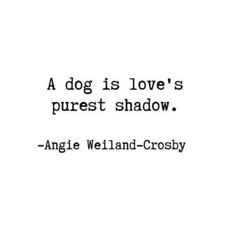 This is the best dog quote.  Simple and true!  It needs to be on the dog quotes sweet list.  #barkinglaughs