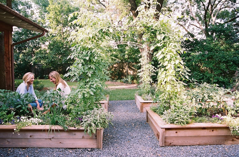 24 Delicious Backyard Fruit Tree Ideas Mediterranean Landscaping Backyard Landscaping Backyard