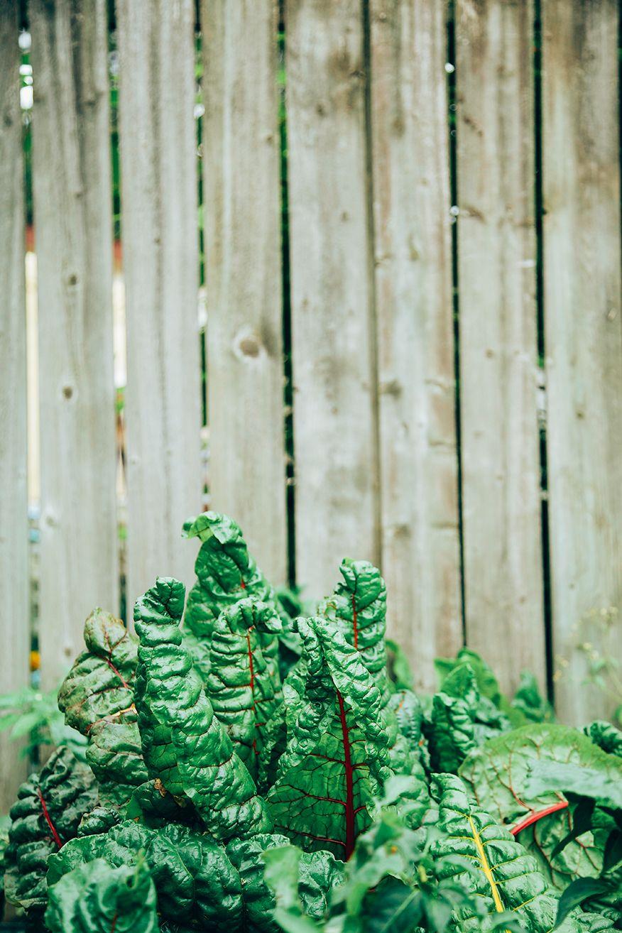 garden chard // @thefirstmess