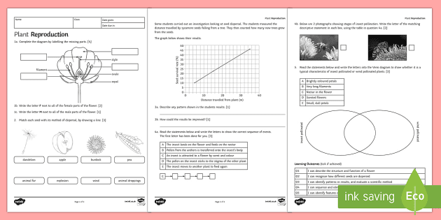 Ks3 plant reproduction homework activity sheet homework ks3 plant reproduction homework activity sheet homework reproduction plant seed seed ccuart Image collections