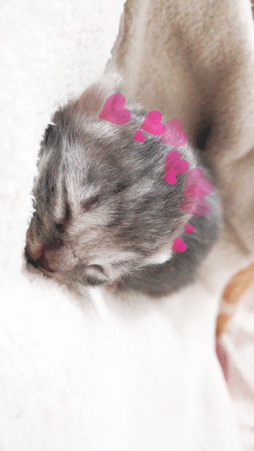 1 Day Old Kitten Kitten Animals Cats