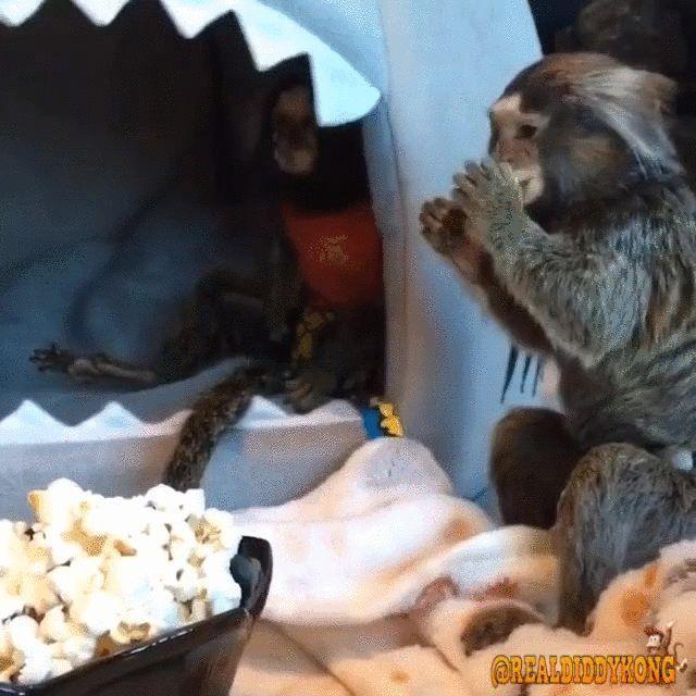 Monkey Business http://ift.tt/25E18dD