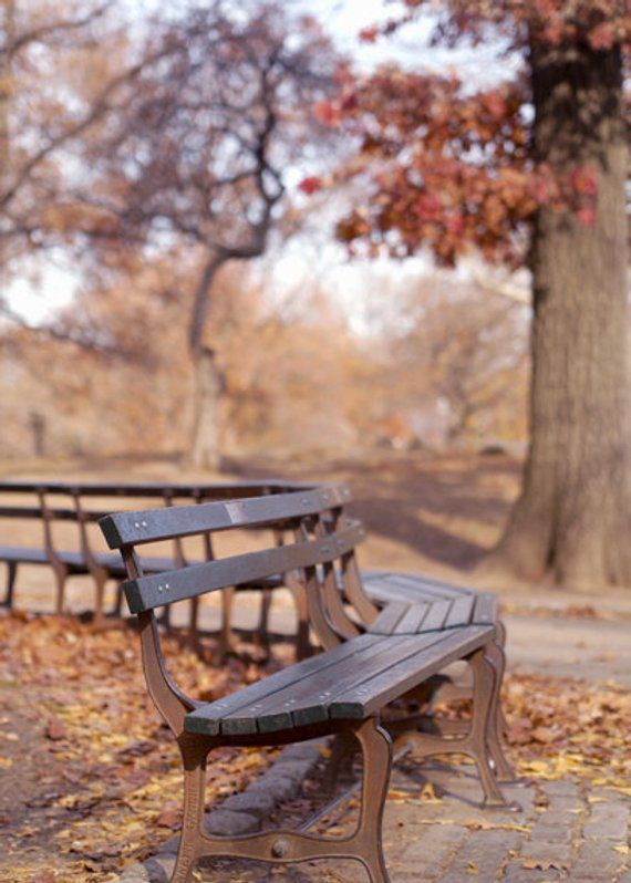 Central Park Bench Photography Brown Copper Wall Art New York Decor