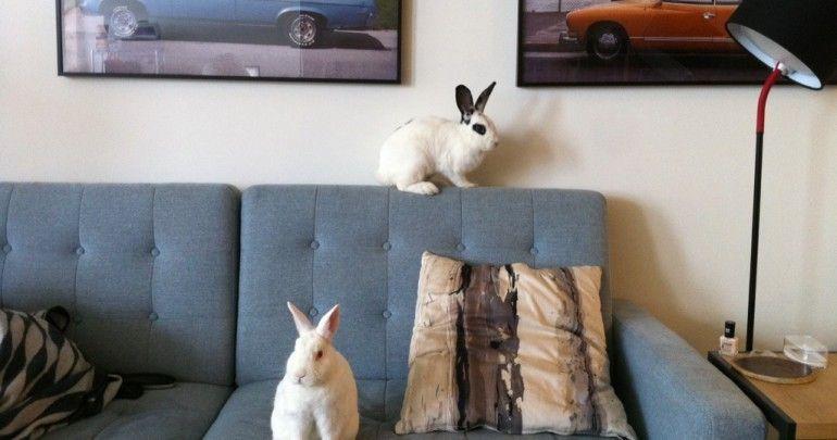 Housing pet rabbit indoors the perfect bunny environment