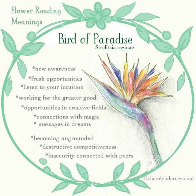 Cheralyn Darcey Flower Reading Oracle Cards Birds Of Paradise Flower Paradise Flowers Flower Meanings