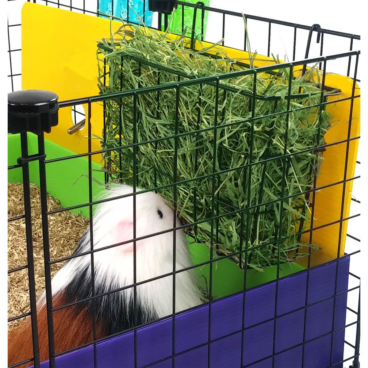 Pin On Guinea Piggies
