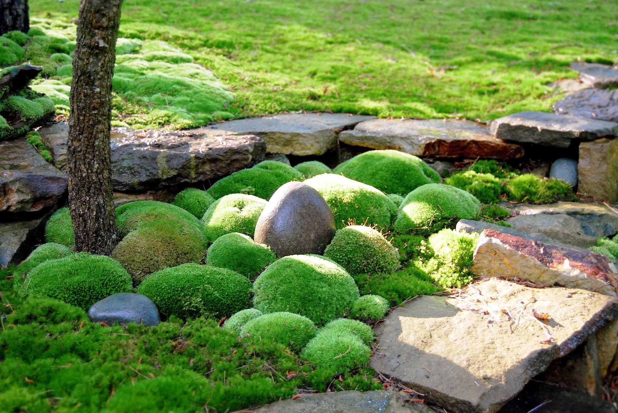 Gathering Moss Moss garden, Garden stones, Growing moss