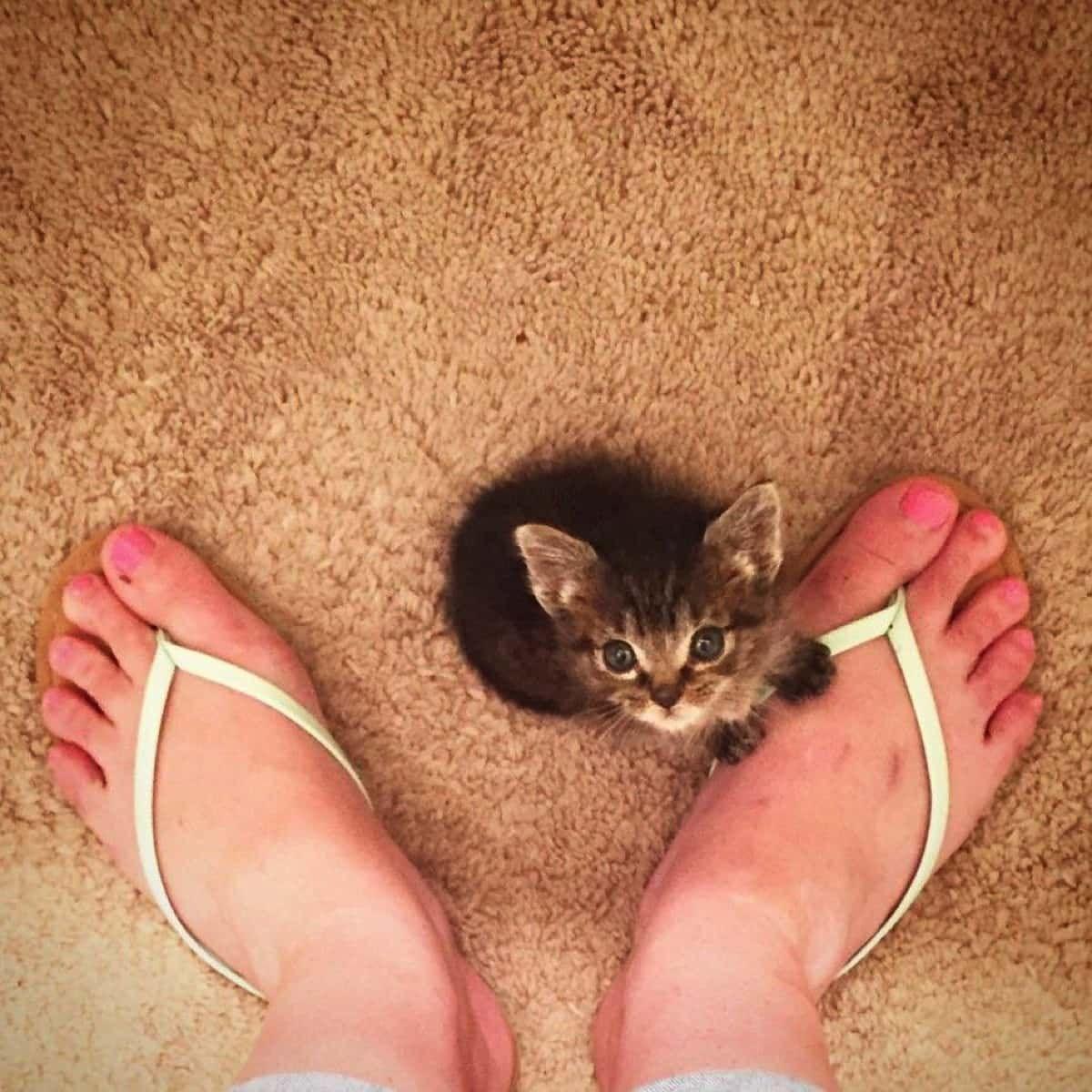 子猫 家族をすべて失った生後1日の子猫 おっぱいの飲み方も知らない彼を 2人の代理ママ が優しく受け入れた Buzzmag 子猫 可愛すぎる動物 キュートな猫