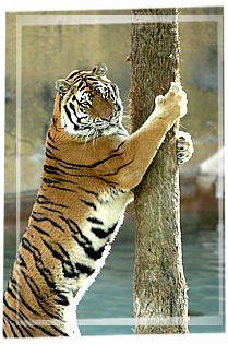 Tree Hugger (seaworld.org)