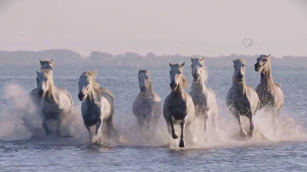 Freedom Sergey Grischuk Freedom Video Horse Videos Youtube Horse Videos