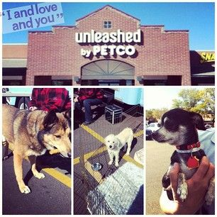 I And Love And You Iandloveandyoupet Instagram Photos And Videos Support Dog Dog Adoption Petco