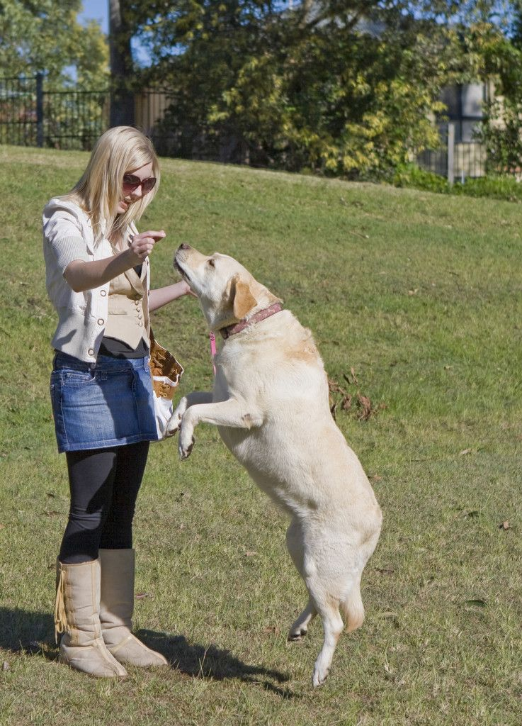 How To Train Your Dog Tip 6 Stop Jumping Up Training Your Dog Dog Clicker Training Dogs