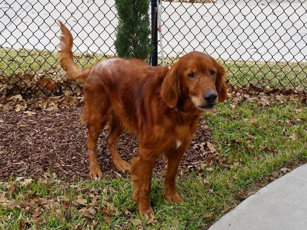 ADOPTED!!! Nevada is a Golden Oldie at 11 years old. To