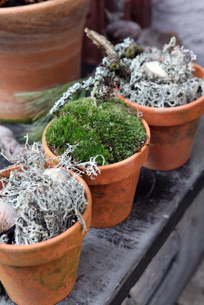 Sukkulenten In Korkstopsel Anlegen Eine Tolle Deko Idee , Winterdeko Mit Pflanzen Kreativ Ideen Pinterest