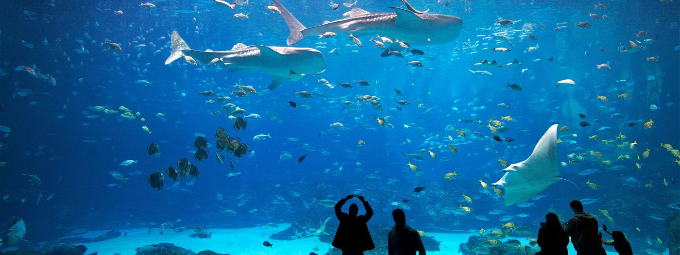 The 12 Best Aquariums In U S For 2018 Tripping