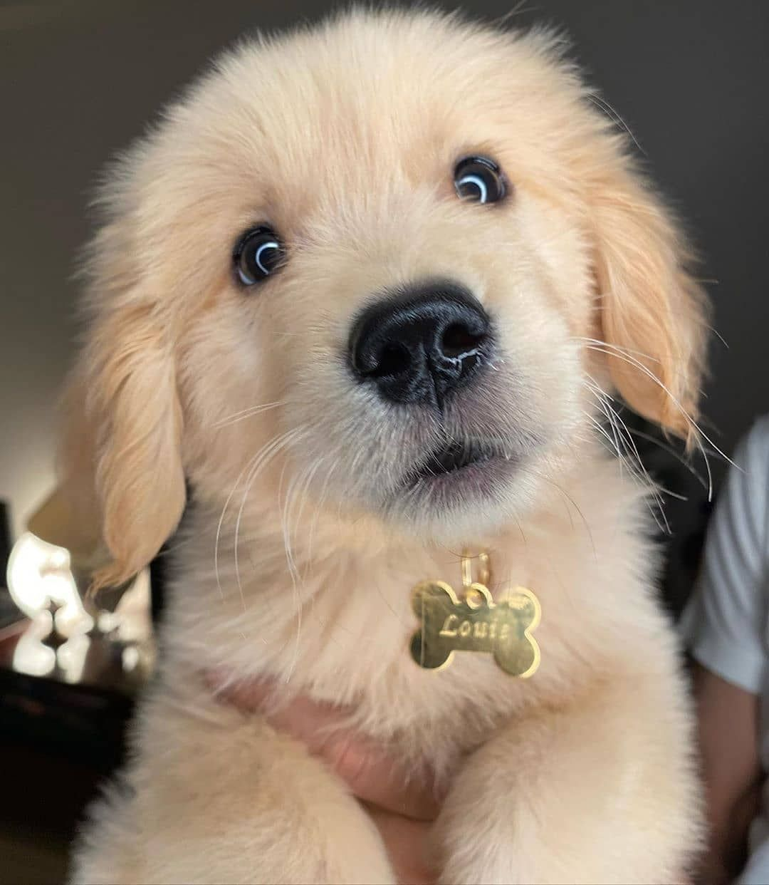 Insta Golden Retrievers Dogs On Instagram Good Morning