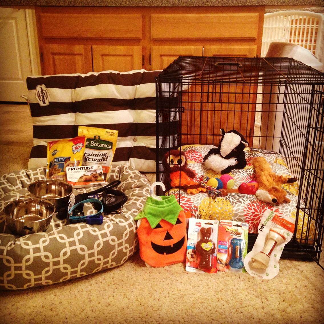Getting ready for our new puppy the essentials dog