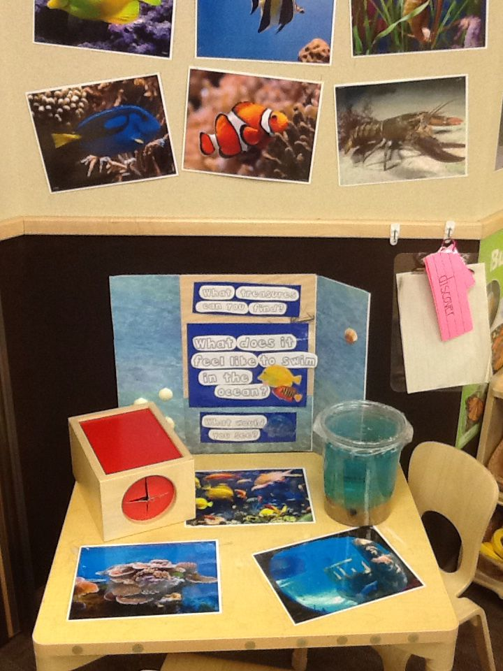 Preschool Ocean Theme Room Enhancement Science Table