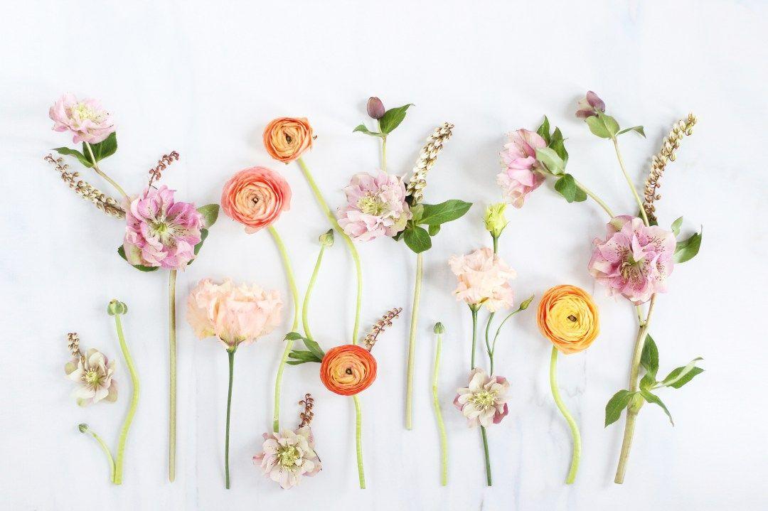 Digital Blooms April 2017 Free Desktop Wallpapers Digital Blooms Turns 1 Justinecelina Floral Wallpaper Desktop Flower Desktop Wallpaper Computer Wallpaper Desktop Wallpapers