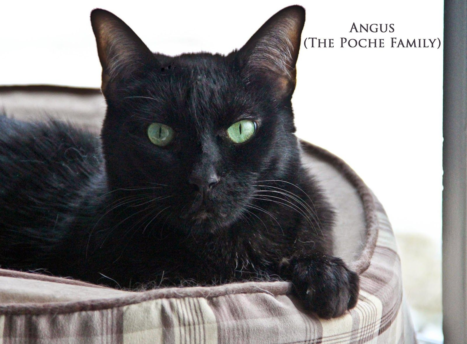 Calendar Cat of the Month