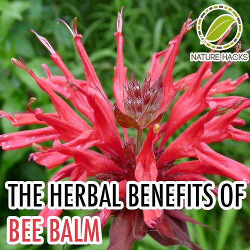 The 9-Second Trick For How To Plant Bee Balm Seeds