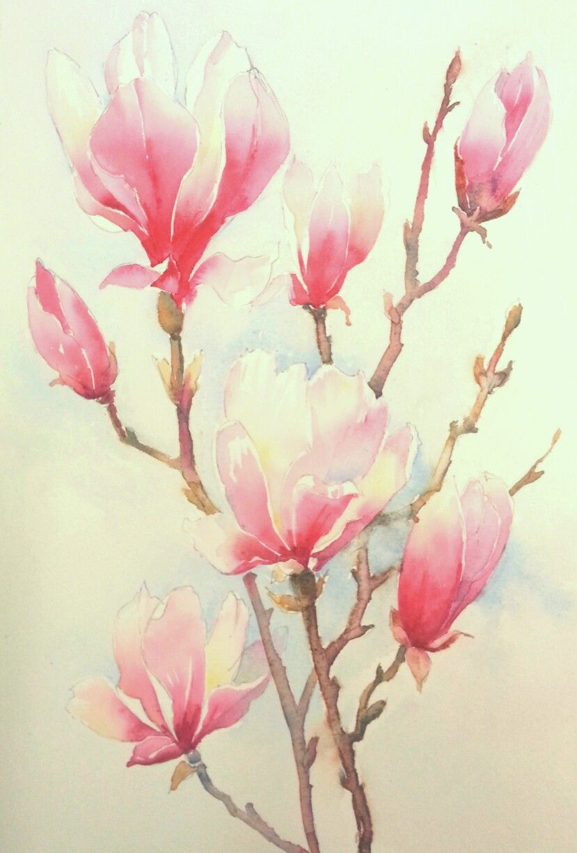 Magnolia Flowers Watercolour Watercolor Plants Watercolor Flowers Painting