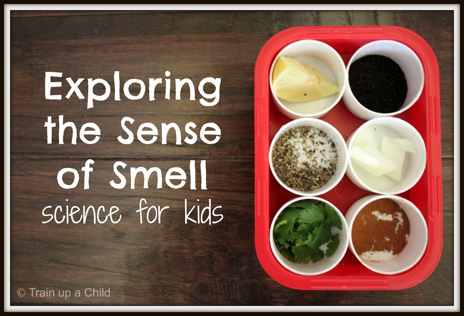 Smell Worksheet Toddlers