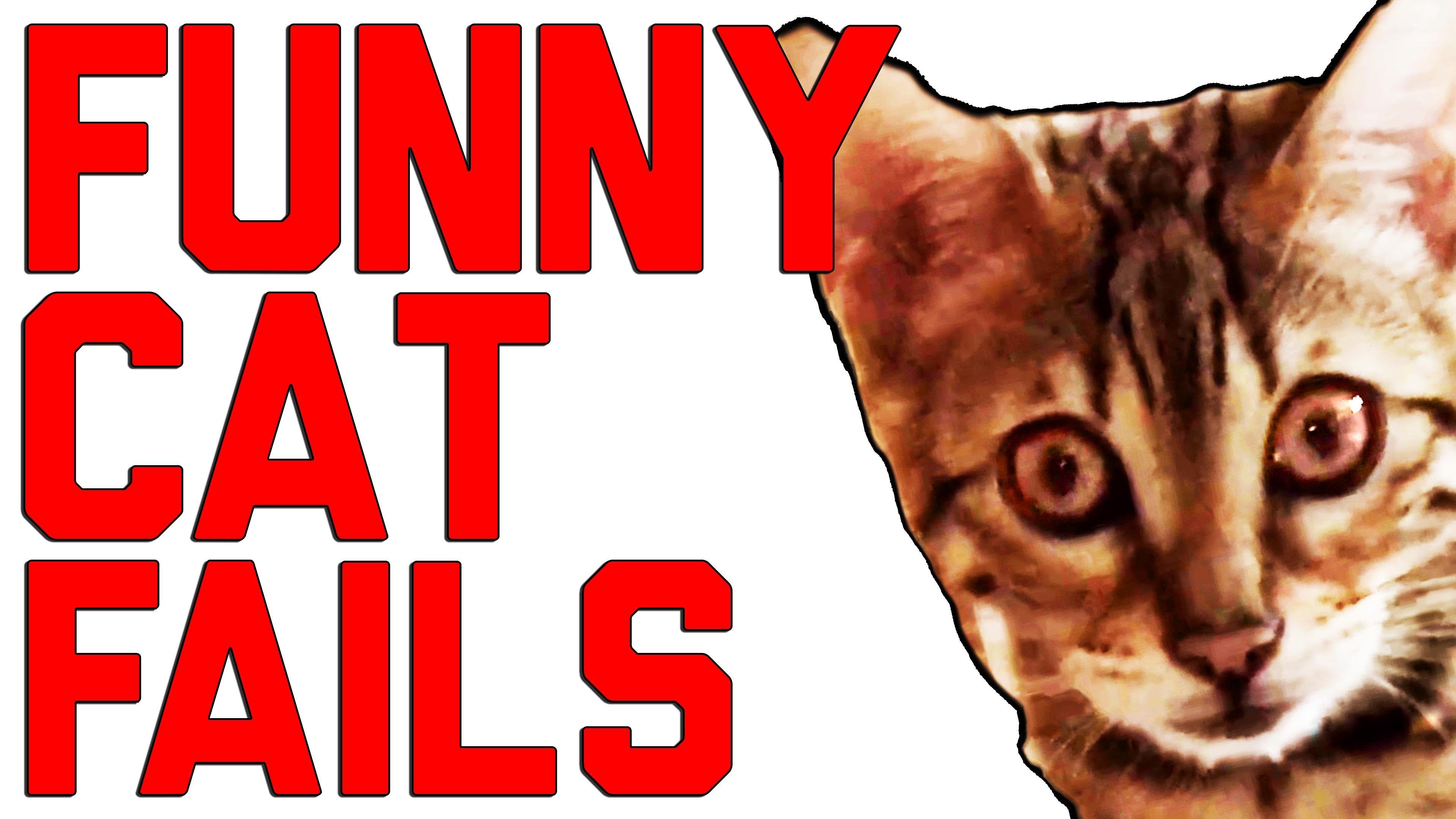Funny Cat Fails pilation by FailArmy 2016