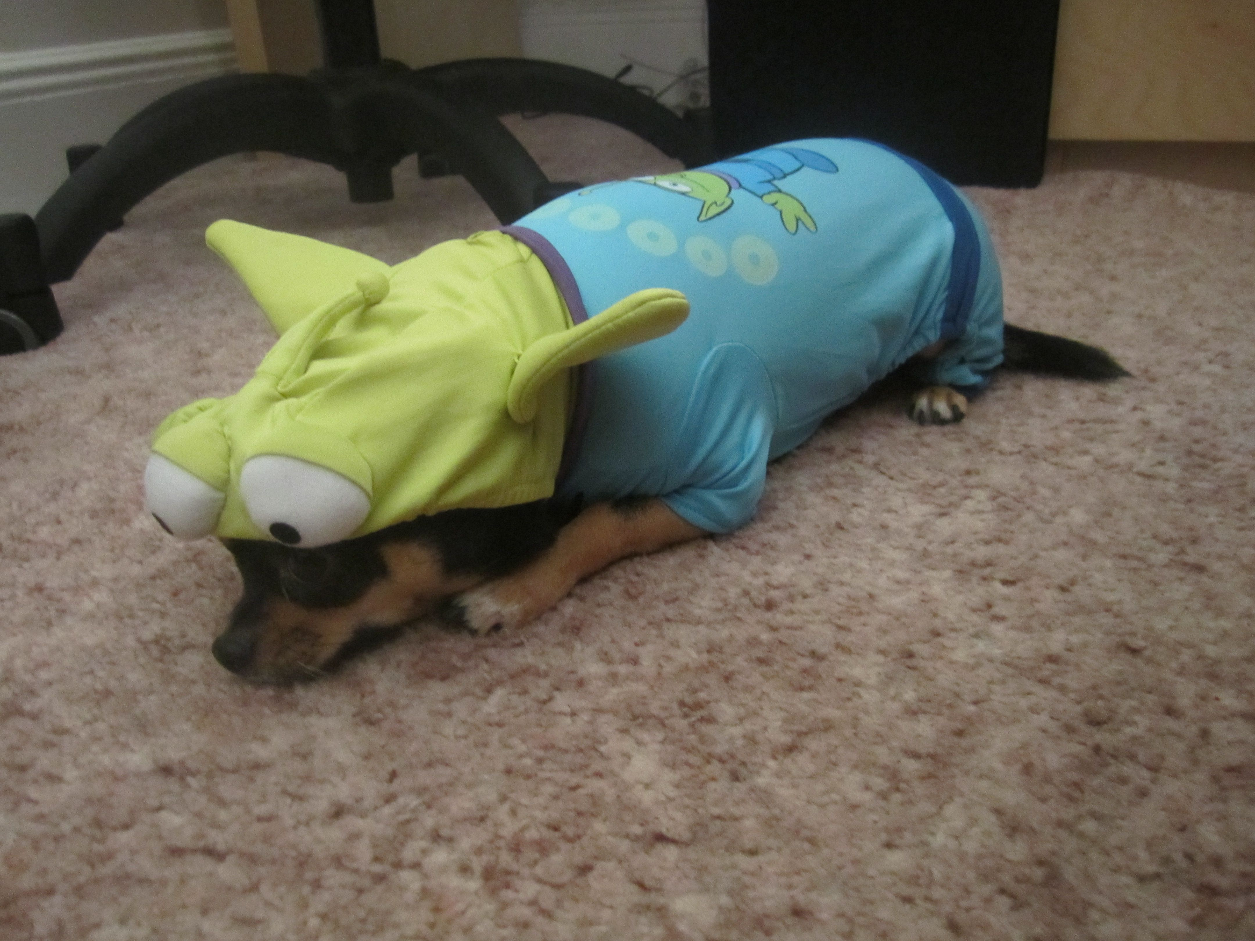 """""""my chihuahua, Zorro in his toy story alien costume makes me feel good. Even when he's naked in just fur he makes me feel good. His happiness is contagious and he has a never-ending supply of love"""" This photo submitted by Haley from New York on 19 june, 2012"""