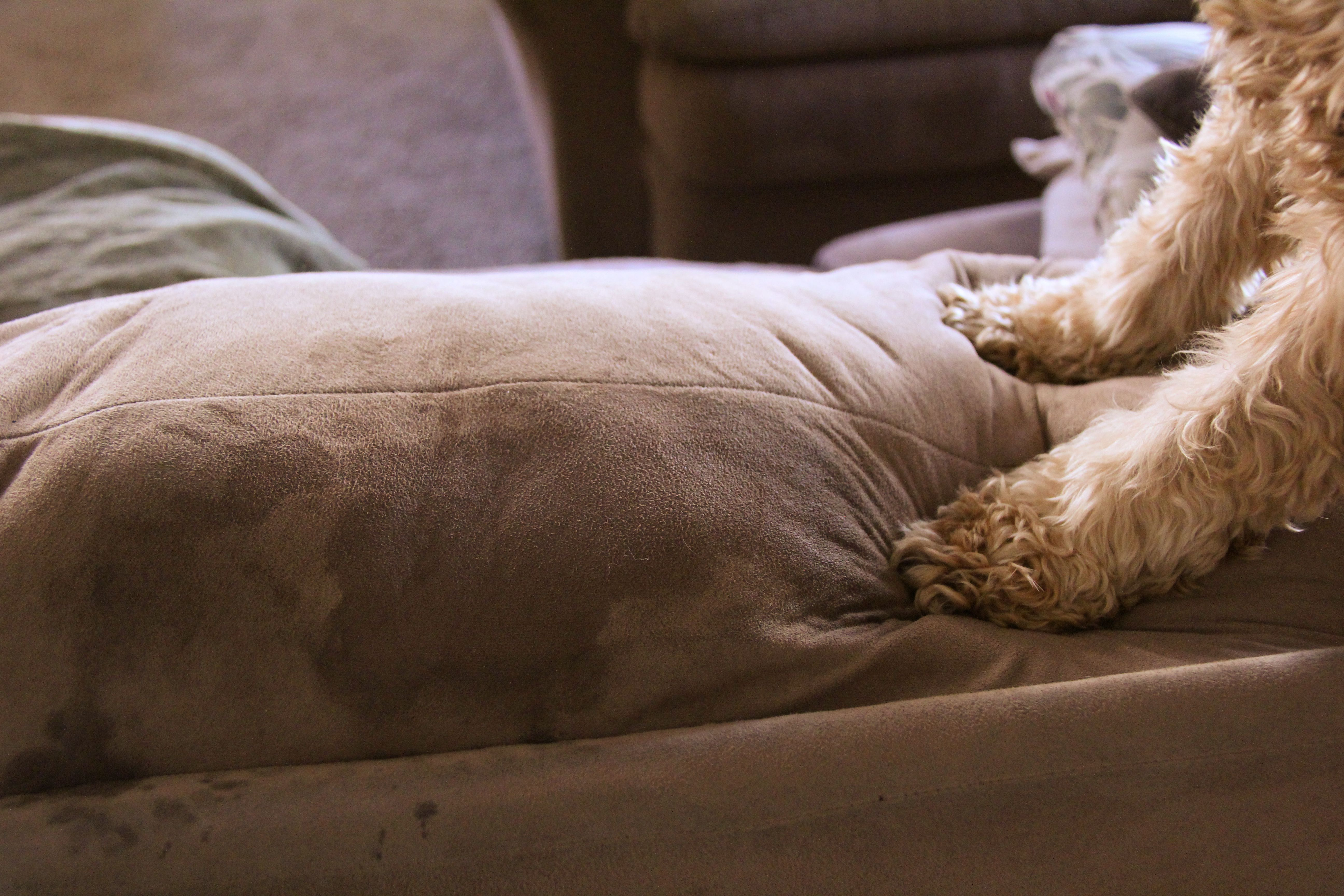 How to clean urine out of couch cushions with images