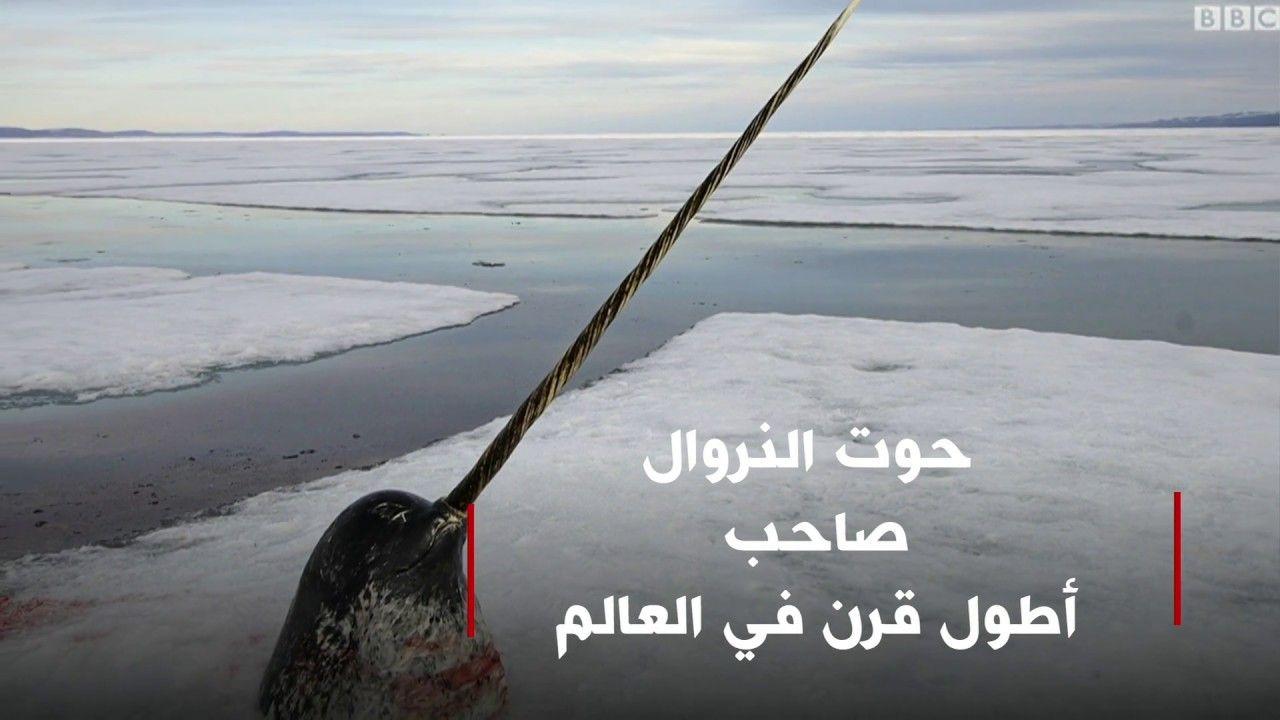 حوت النروال صاحب أطول قرن في العالم Snow Shovel Outdoor Snow