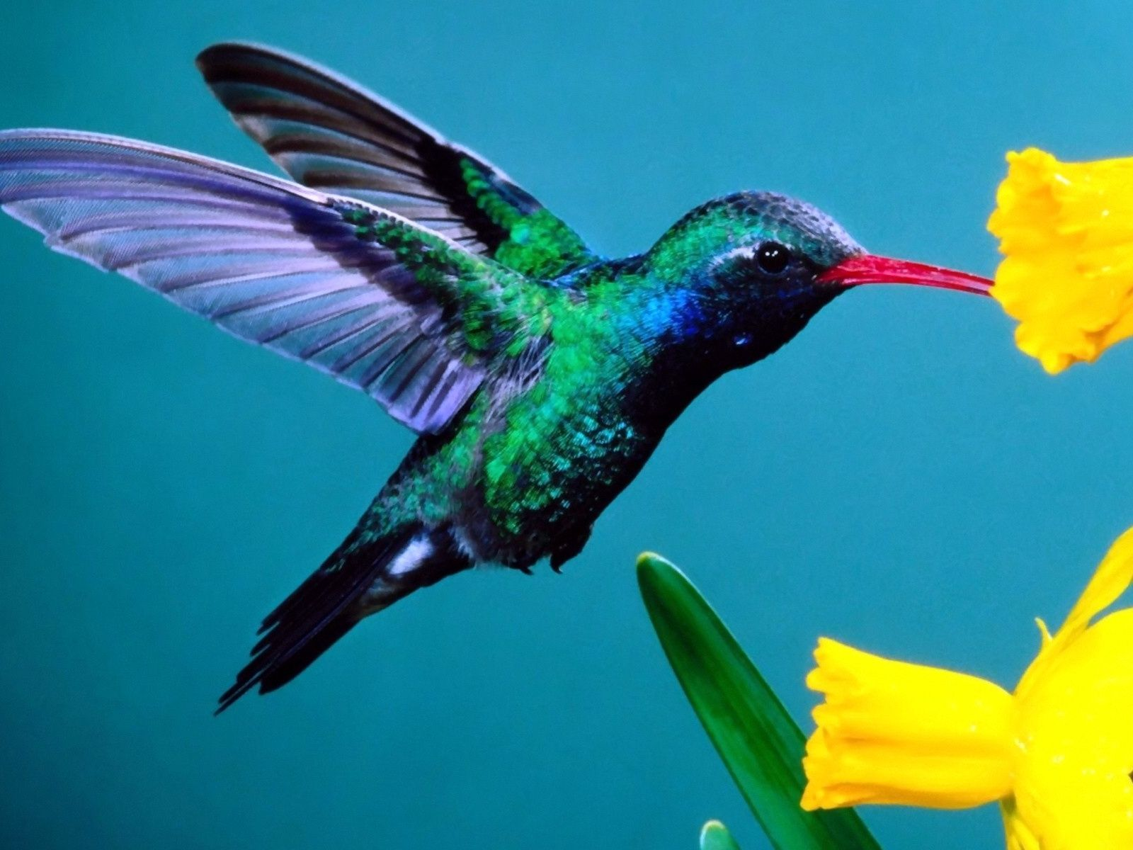 Mobile Wallpapers Cell Phone Wallpapers Hd Mobile Wallpapers Beautiful Birds Cute Birds Animal Medicine