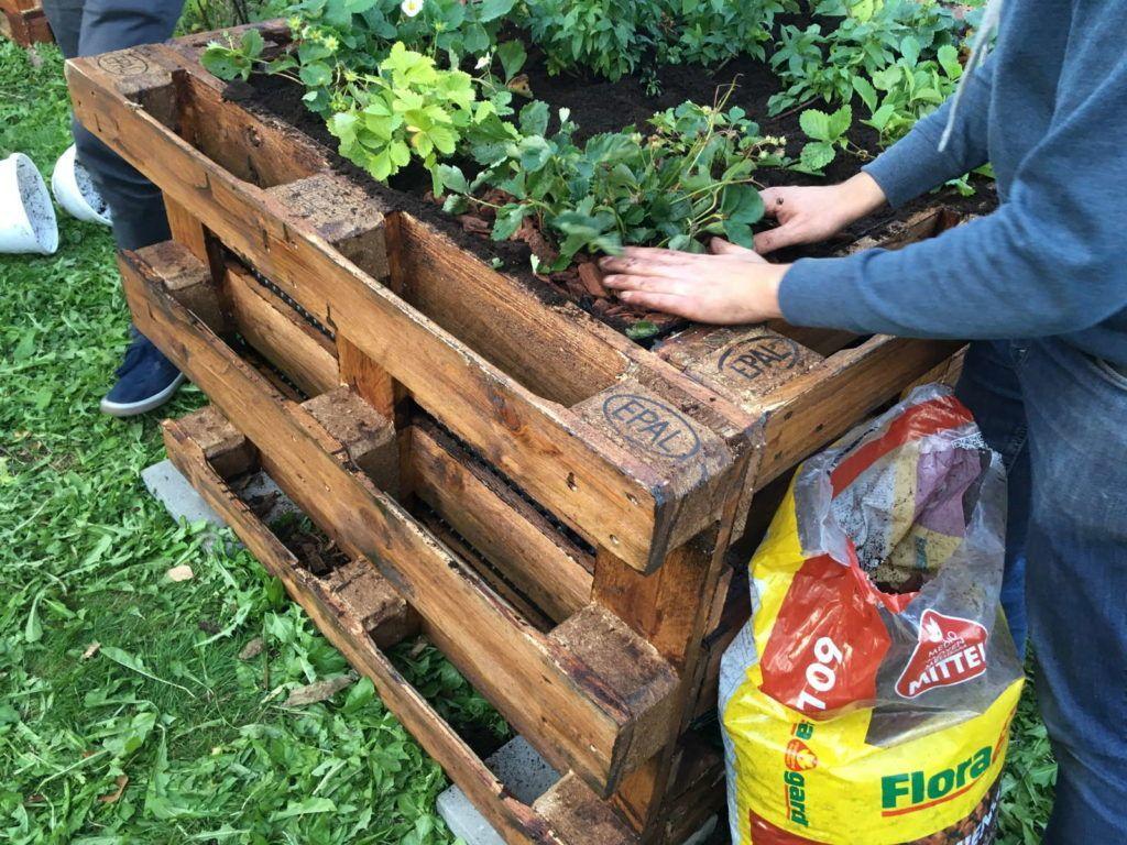 Die Top 10 Der Besten Pflanzen Fur Ein Hochbeet Plantura In 2020 Hochbeet Pflanzen Hochbeet Bepflanzen Hochbeet