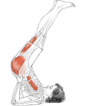 viparita karani  anatomía de yoga posturas de yoga