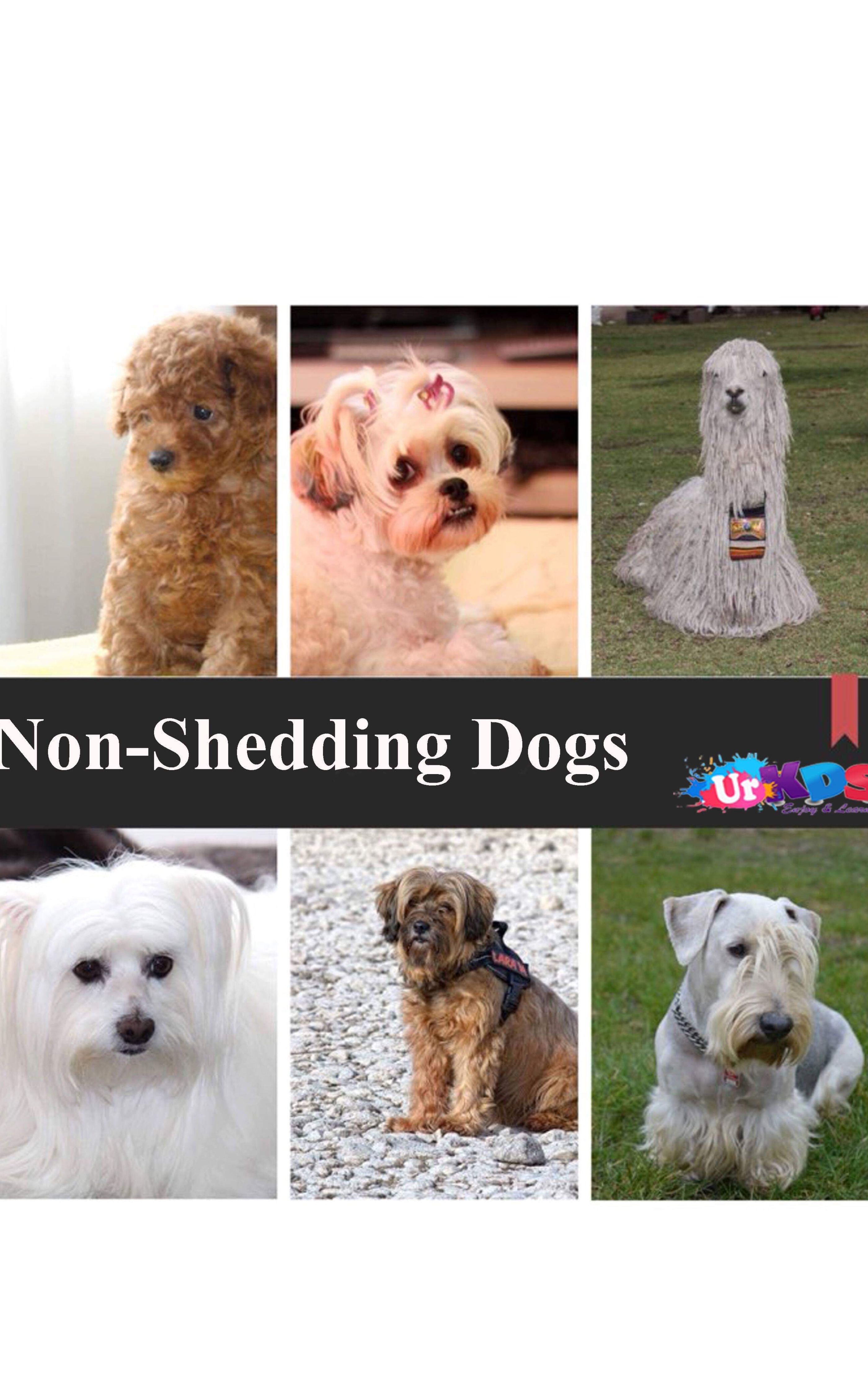 Top 10 Dog Breeds That Don T Shed Shedless Dogs Breeds Dog Shedding Dog Breeds That Dont Shed Dog Breeds