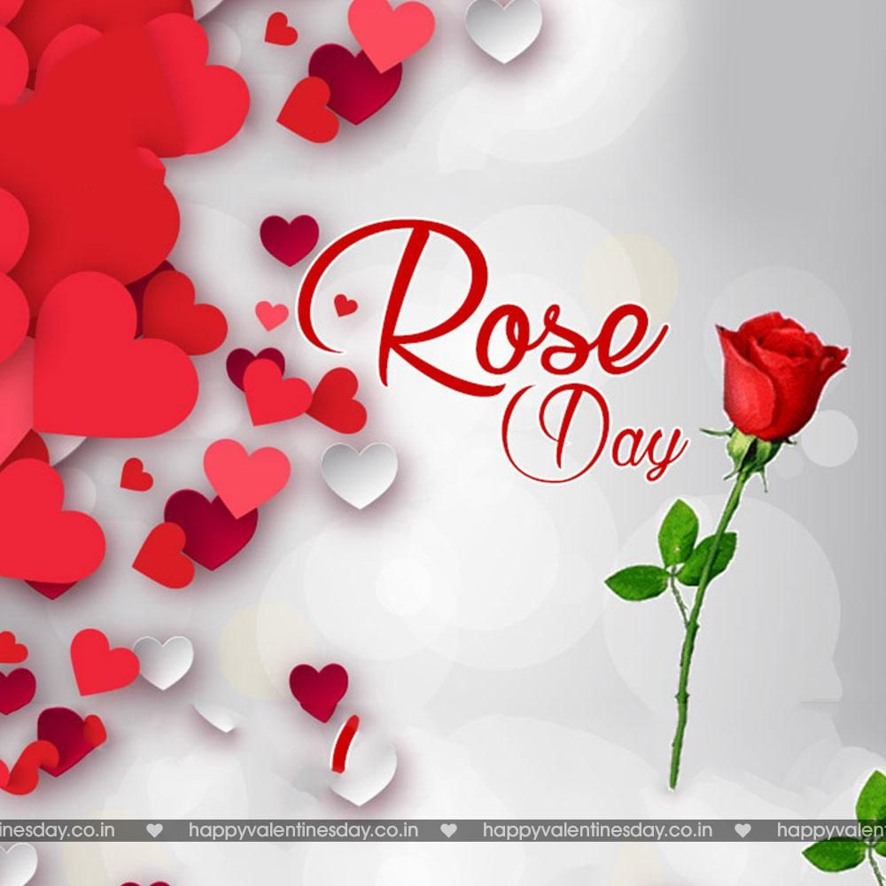 Rose Day Valentines Day Images Free Download Httpwww