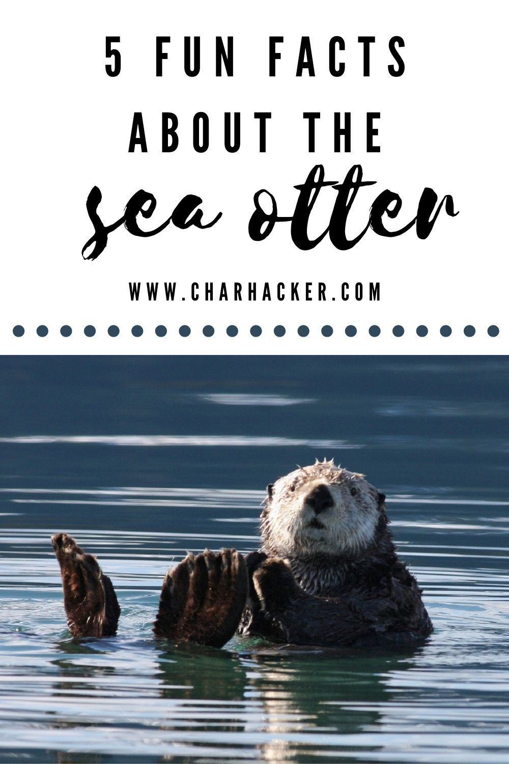 Did you know otters have built in pockets to keep their snacks? OR that they hang onto each other while floating to all stay together? Click to learn even more cool facts about this interesting species!     #conservation #marinelife #marinemammals #mammals #ocean  #endangered #species #wildlife