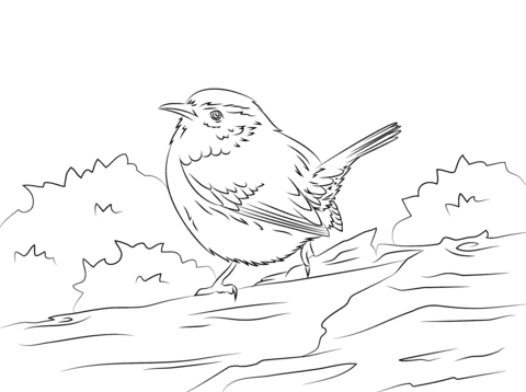 Cute Carolina Wren Coloring Page Free Printable Coloring Pages Bird Coloring Pages Bird Sketch Coloring Pages