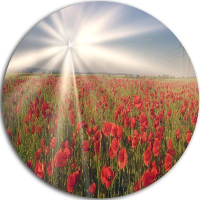 "DesignArt 'Blooming Wild Poppies under Sun' Photographic Print on Metal Size: 11"" H x 11"" W x 1"" D"