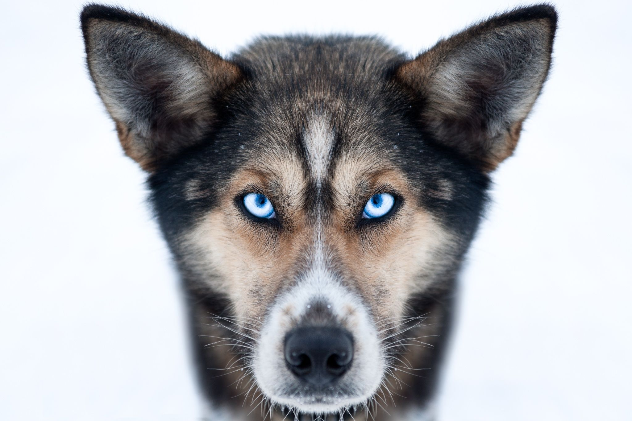 ICE EYES by Jaco Hoffmann on 500px