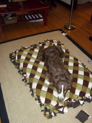 Homemade dog bed on pinterest homemade dog toys for Homemade beds for dogs