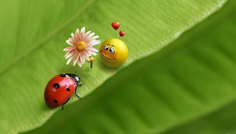 Fondo de Escritorio (Wallpapers) de Catarinas, Mariquitas o Ladybugs y Ladybird